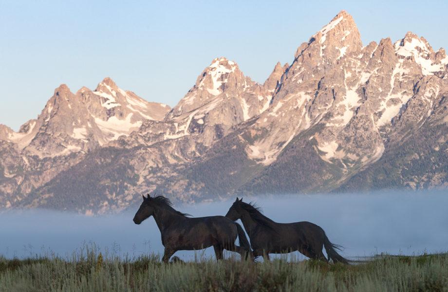 Jack Arnold Horses Tetons